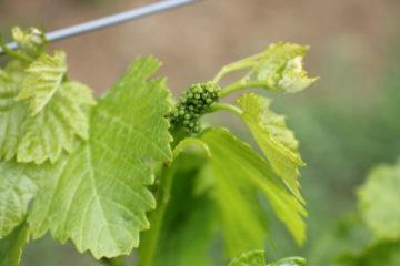 Krajinou vína